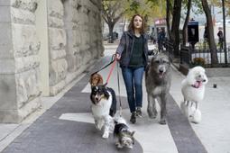 A dog 27s journey 3335997