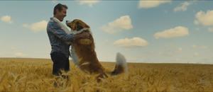 A dog 27s journey 3335998