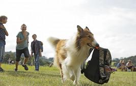 Lassie eine abenteuerliche reise 31