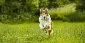Lassie eine abenteuerliche reise 33