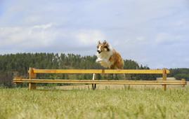Lassie eine abenteuerliche reise 340